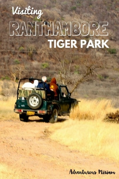 Ranthambore Tiger Reserve in Sawai Madhopur is named one of the best places to spot tigers in India. Here are my tips for visiting the tiger park.