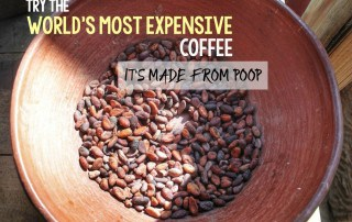 The world's most expensive coffee in Bali