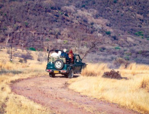 Ranthambore tiger safari – is it worth going?